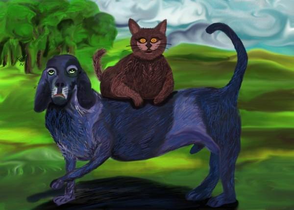 Rencontre chien et chaton